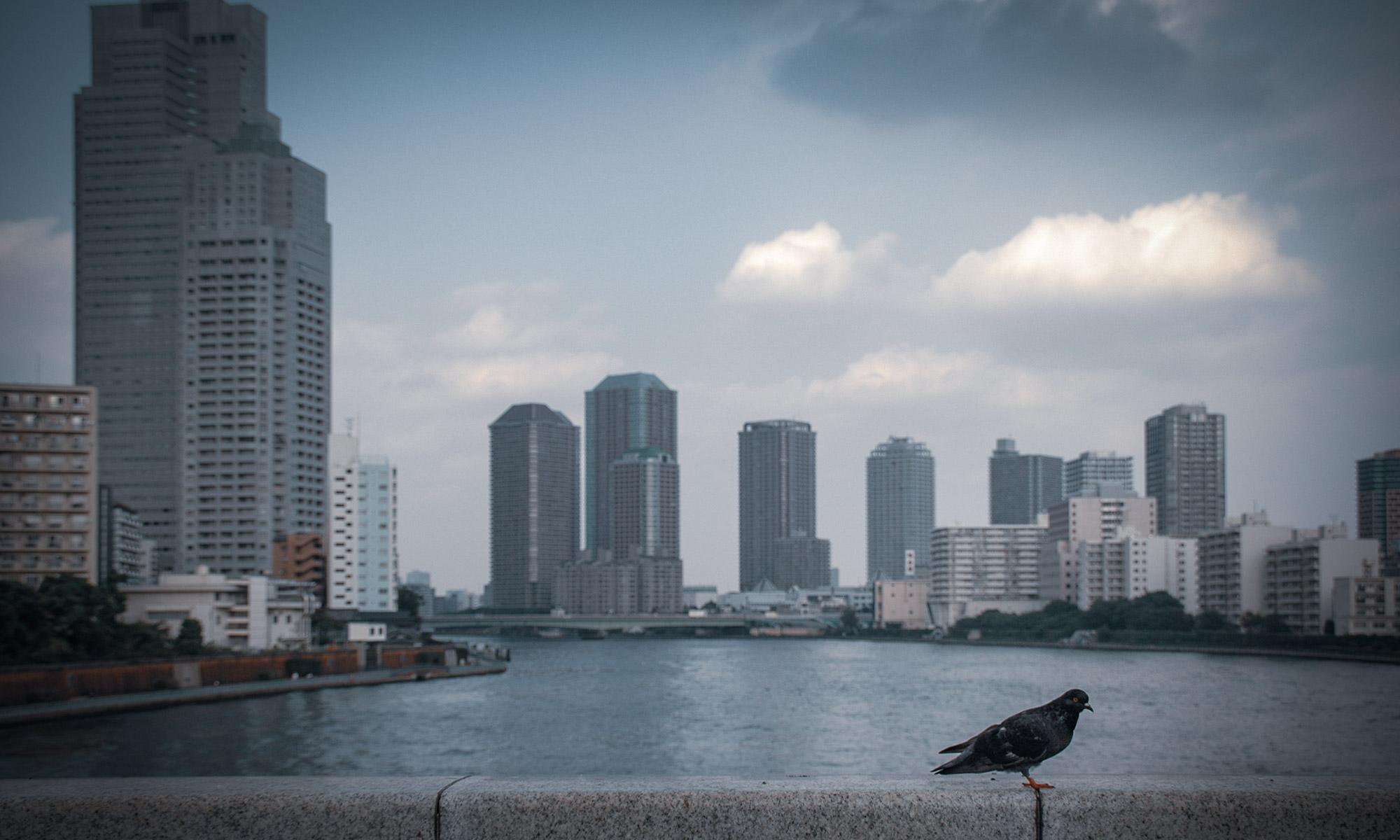 かちどき橋から見たウォーターフロントと欄干と鳩