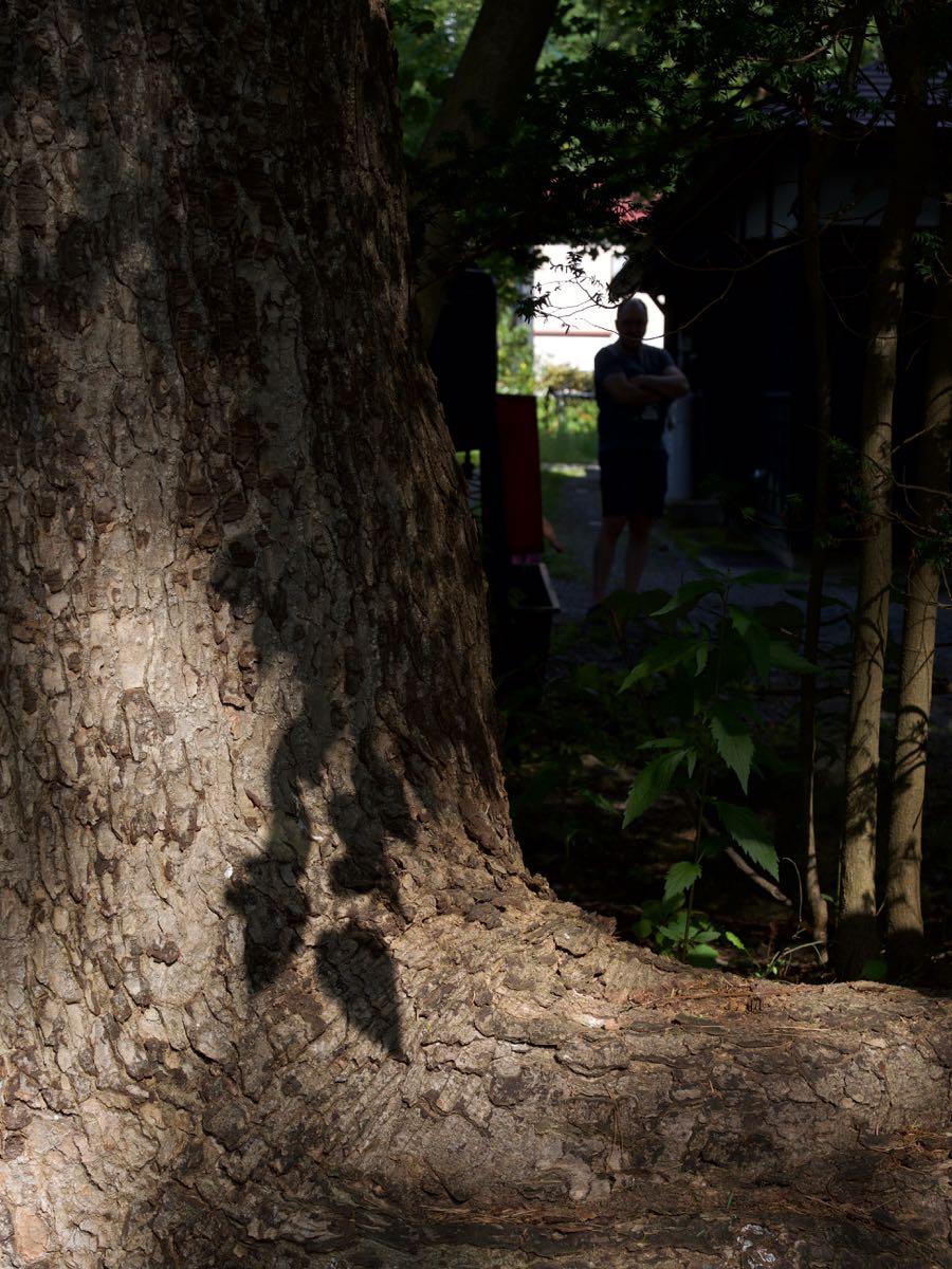 とある店の軒先の大樹 影が美しい