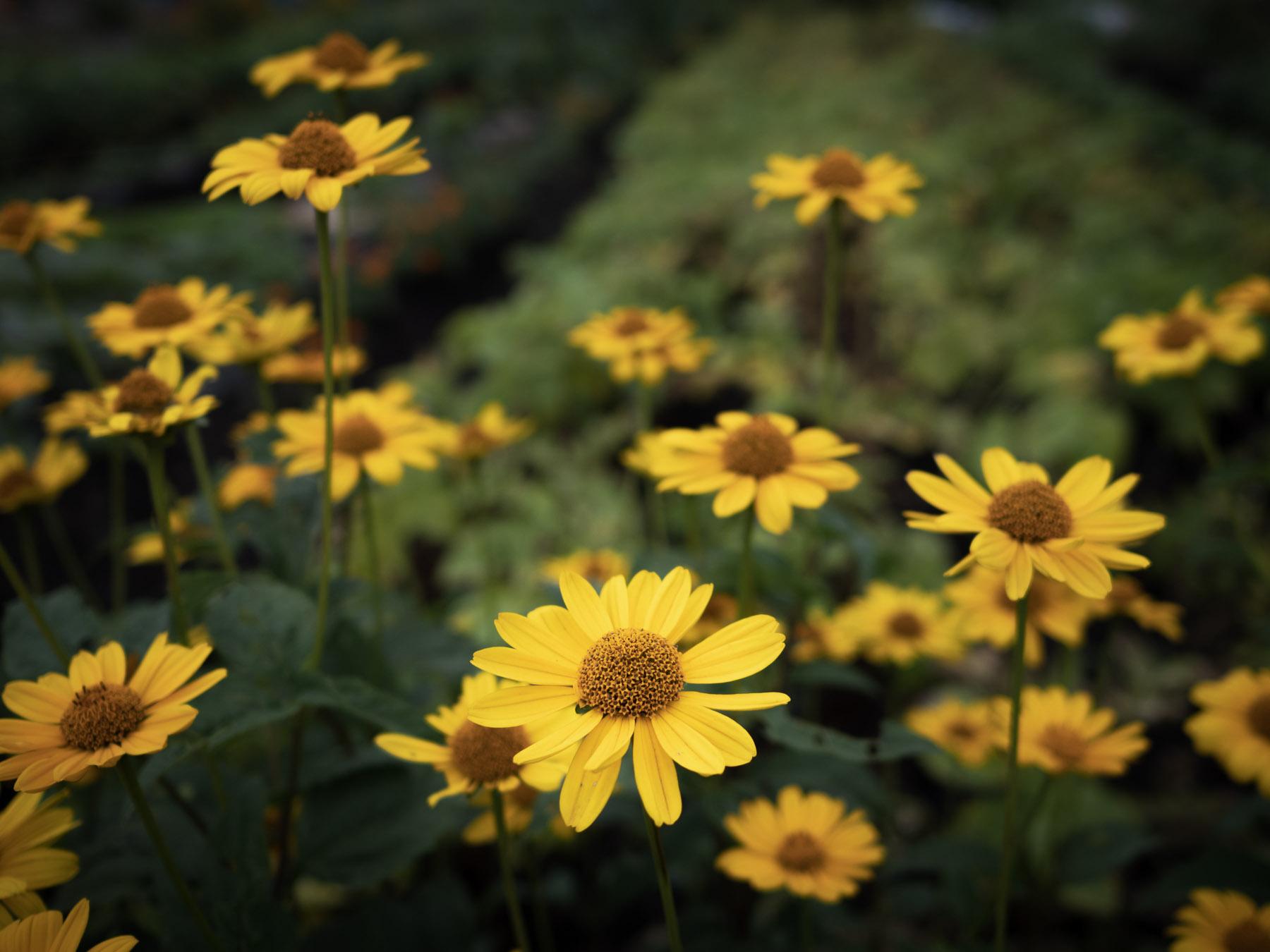 名を知らぬ黄色い花たち