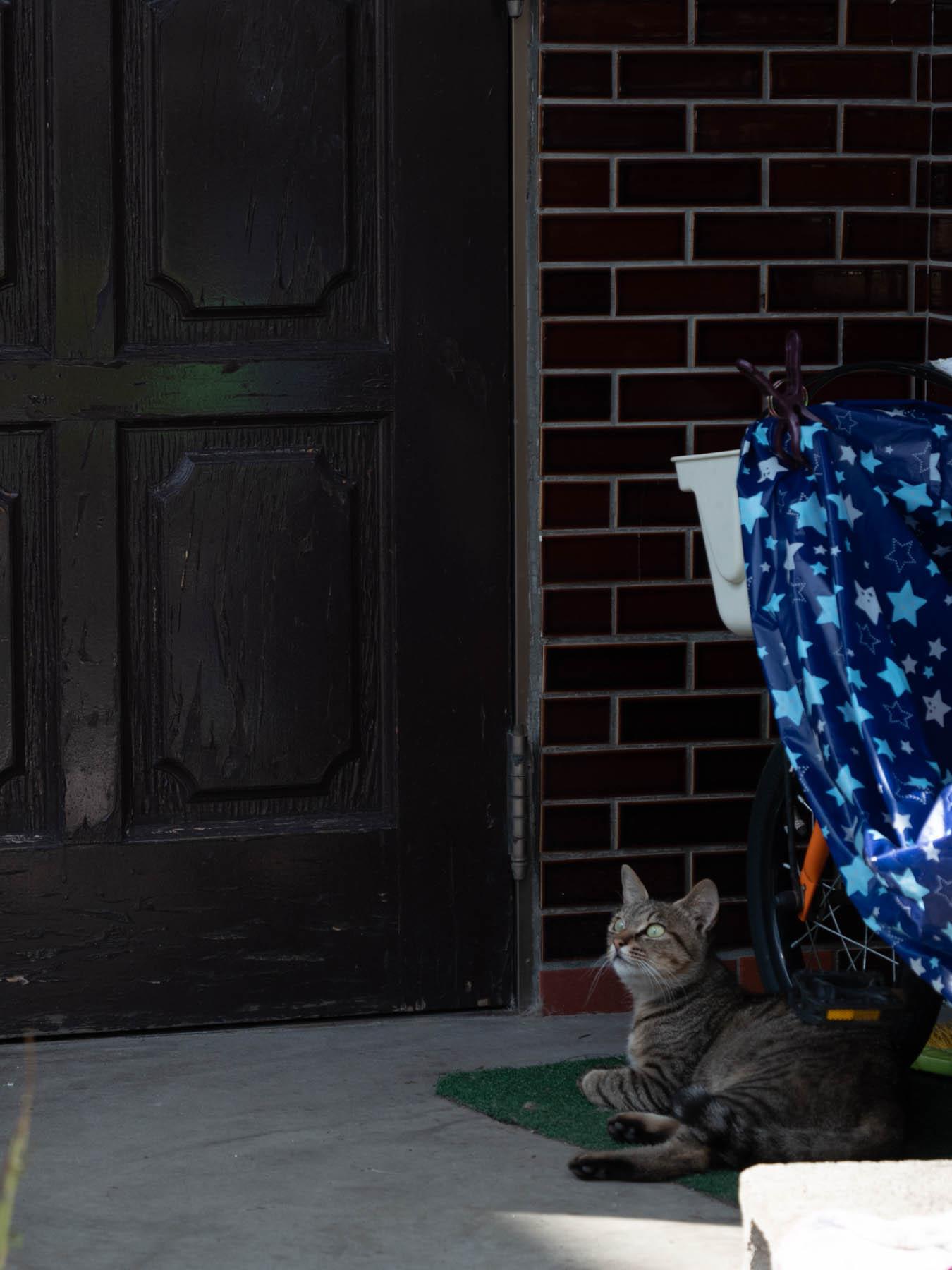日陰の玄関でくつろぐ猫