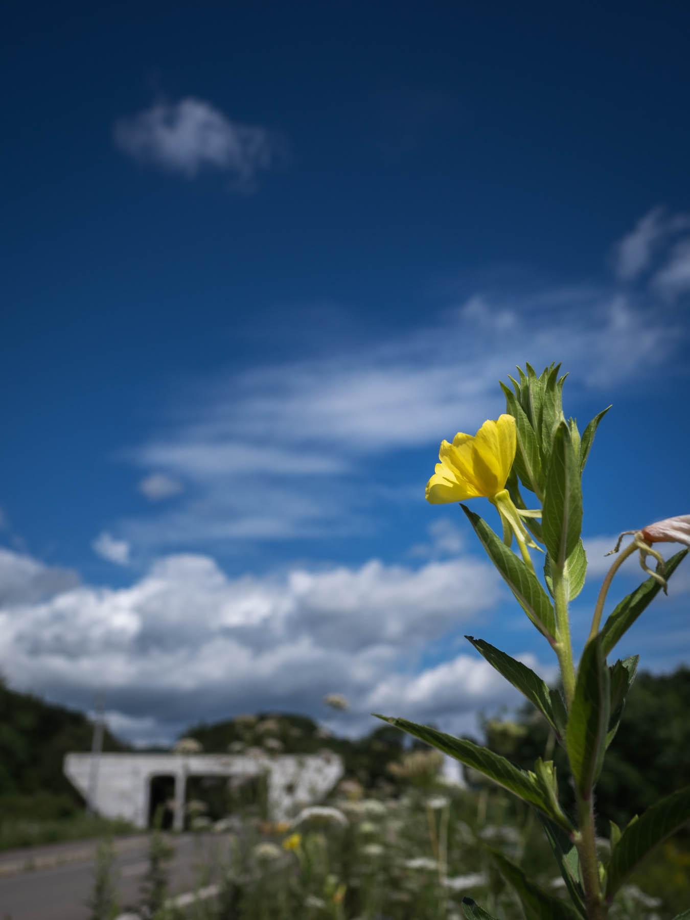 小さな黄色い花と背景に碧く広がる夏の空