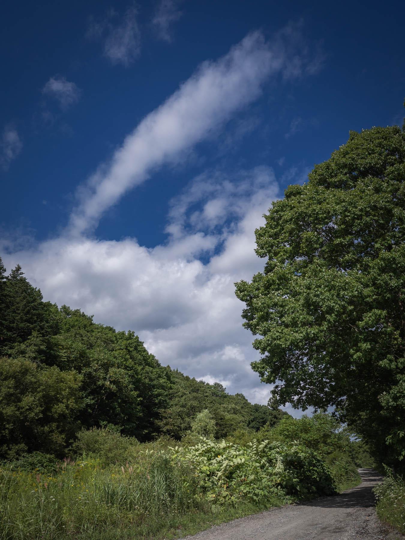 陣川へと続く山道と生い茂る緑と夏の空