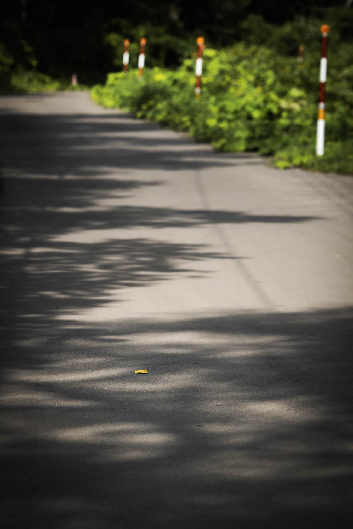 アスファルトに落ちる草の影と道路