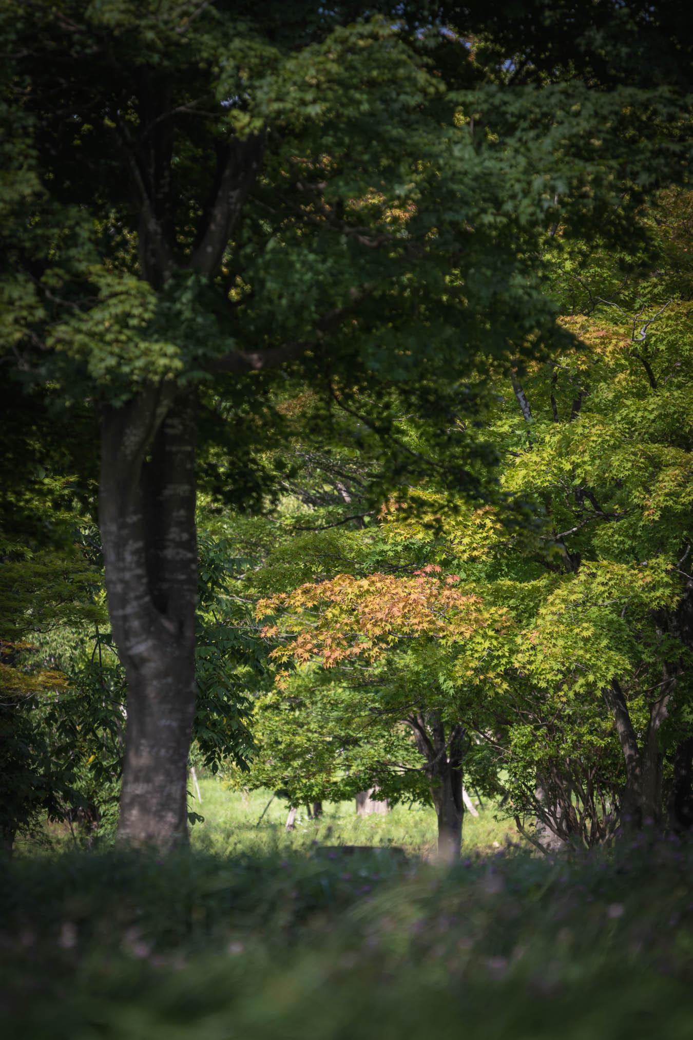 林の奥の、秋色に染まり始めた木々